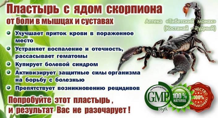 Пластырь с ядом скорпиона от болей в мышцах и суставах. Лечение заболеваний позвоночника, суставов, мышц в Костанае и Рудном